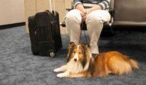 Usa, gli aeroporti si equipaggiano con toilette per animali domestici